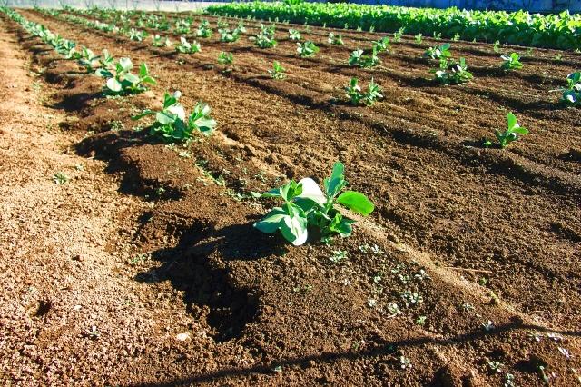地目が雑種地でも農用地区域に入っていれば転用が制限される