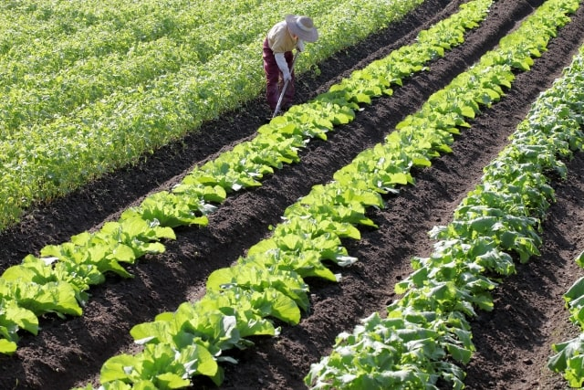 調整区域の農地について